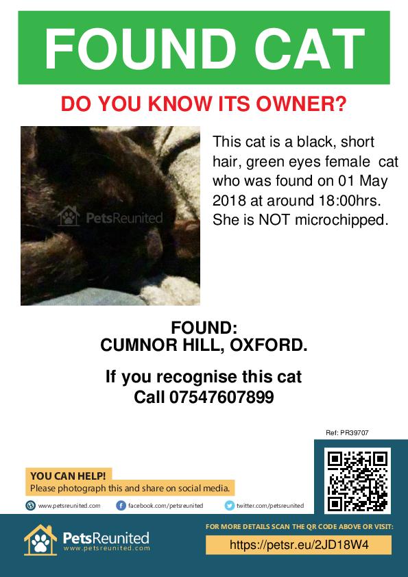 Found pet poster - Found cat: black, short hair, green eyes cat