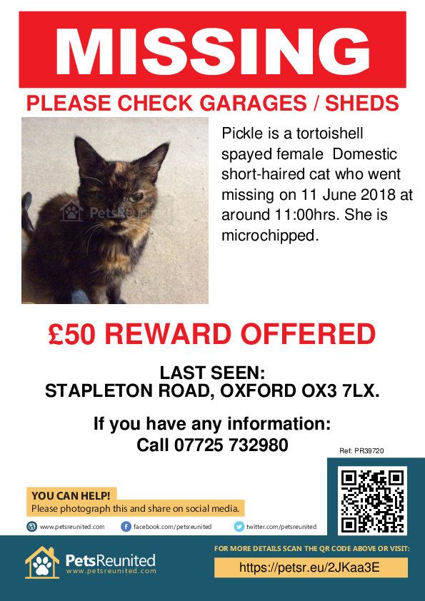 Lost pet poster - Lost cat: Tortoishell cat called Pickle