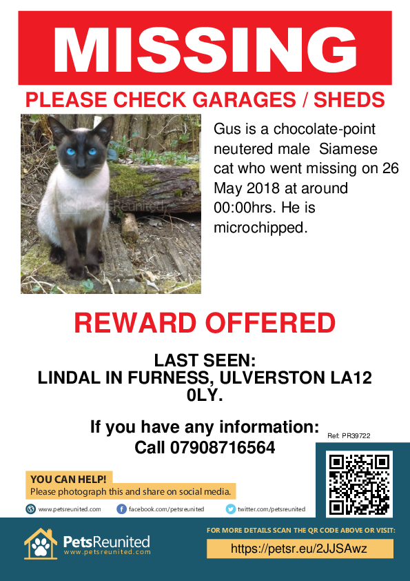 Lost pet poster - Lost cat: Chocolate-Point Siamese cat called Gus