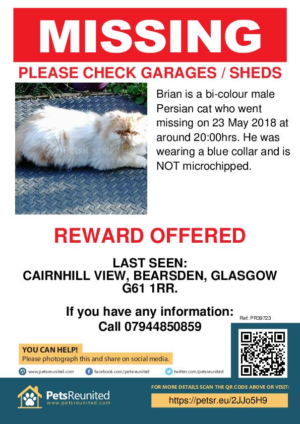 Lost pet poster - Lost cat: Bi-Colour Persian cat called Brian