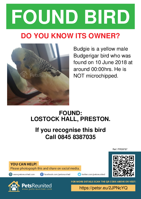 Found pet poster - Found bird: Yellow Budgerigar bird called Budgie