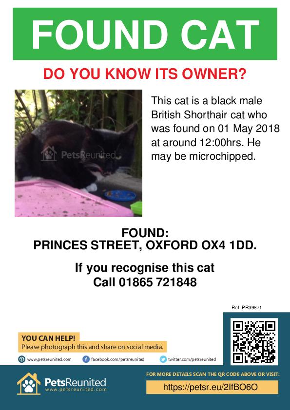 Found pet poster - Found cat: Black British Shorthair cat
