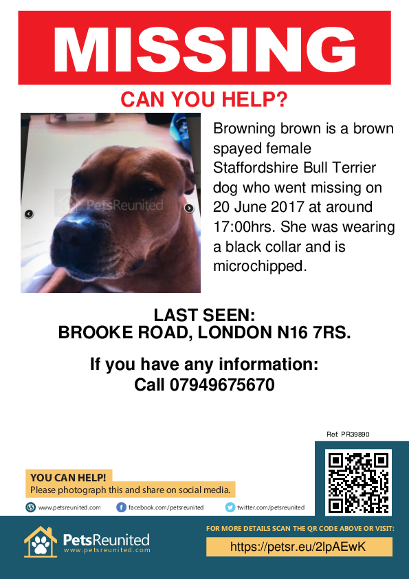 Lost pet poster - Lost dog: Brown Staffordshire Bull Terrier dog called Browning brown