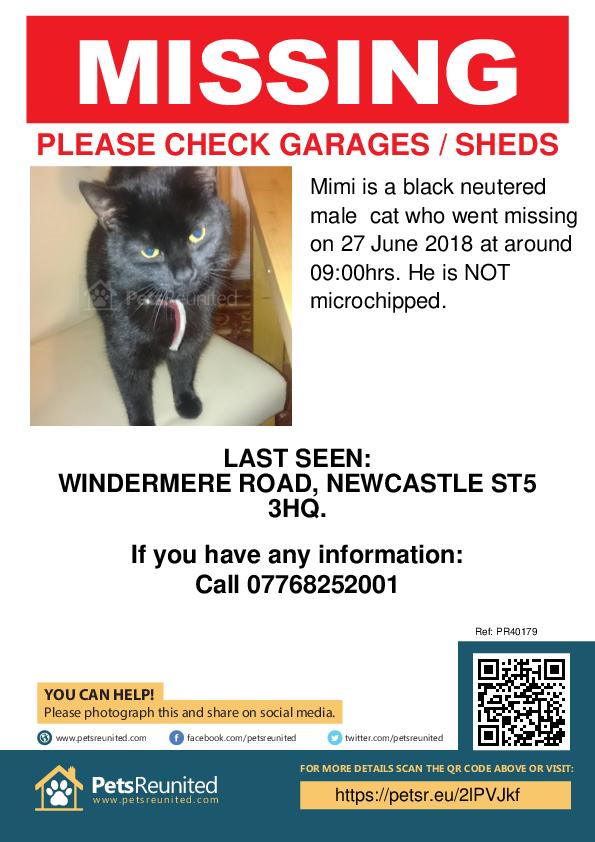 Lost pet poster - Lost cat: Black cat called Mimi