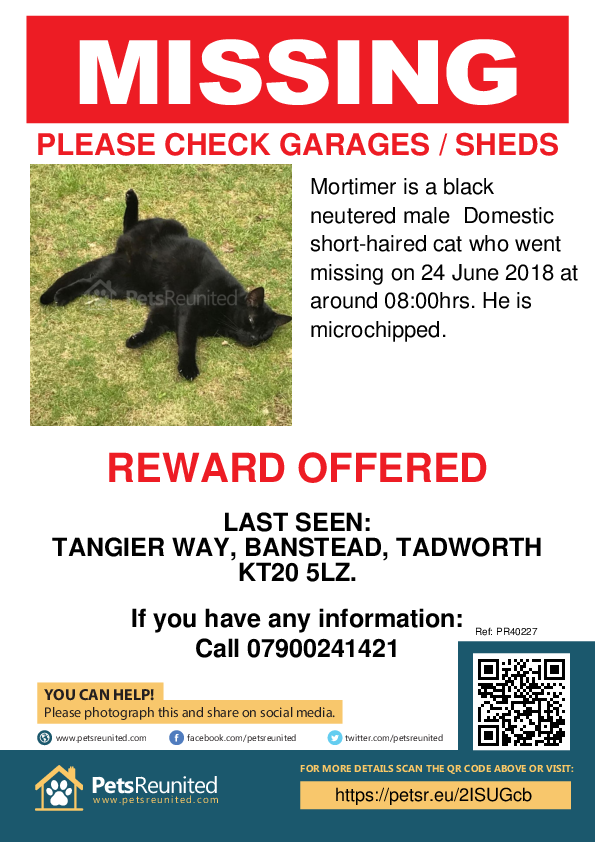 Lost pet poster - Lost cat: Black cat called Mortimer