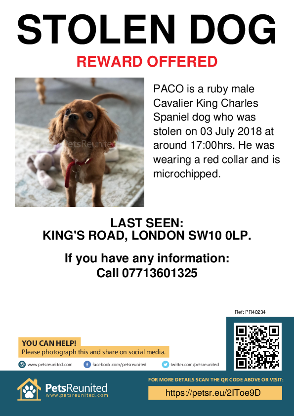 Stolen pet poster - Stolen dog: Ruby Cavalier King Charles Spaniel dog called PACO