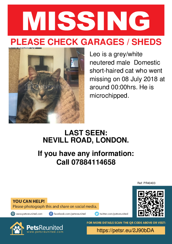 Lost pet poster - Lost cat: Grey/White cat called Leo