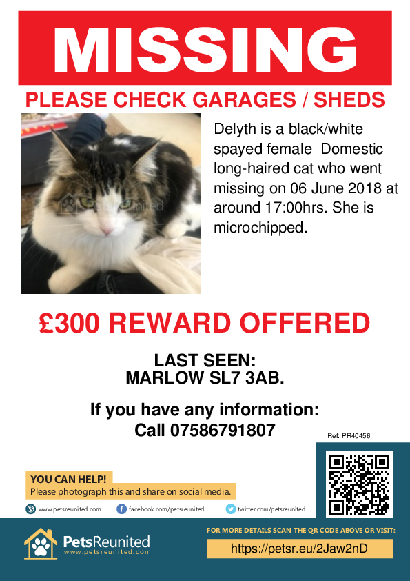 Lost pet poster - Lost cat: Black/White cat called Delyth