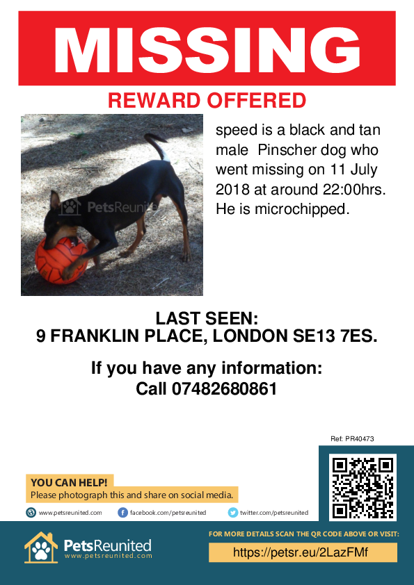 Lost pet poster - Lost dog: black and tan Pinscher dog called speed