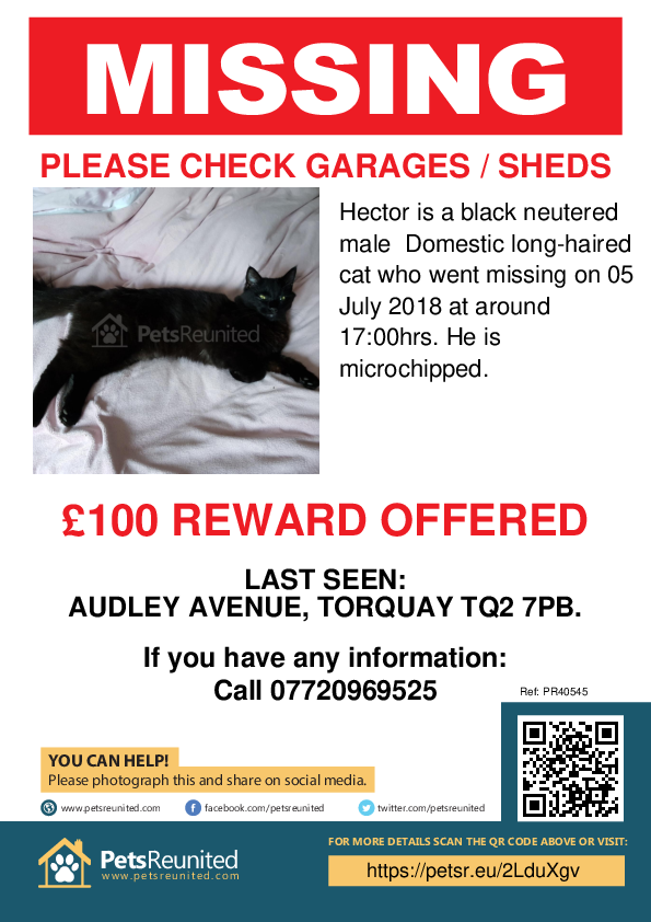 Lost pet poster - Lost cat: Black cat called Hector