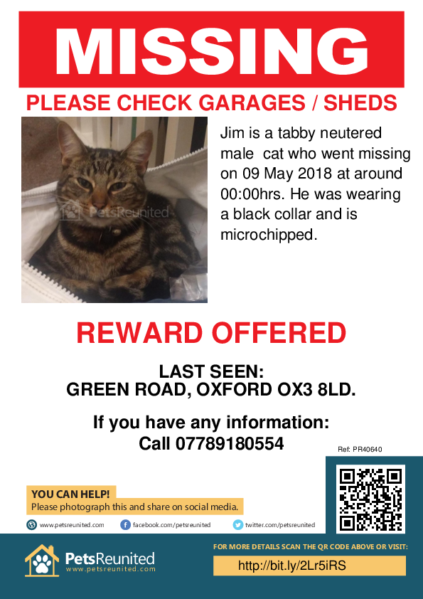 Lost pet poster - Lost cat: Tabby cat called Jim