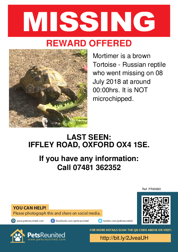Lost pet poster - Lost tortoise : brown Russian tortoise  called Mortimer