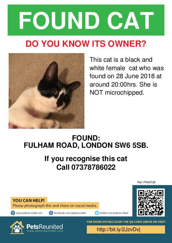 Found pet poster - Found cat: Black and white cat