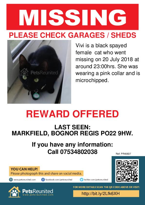 Lost pet poster - Lost cat: Black cat called Vivi