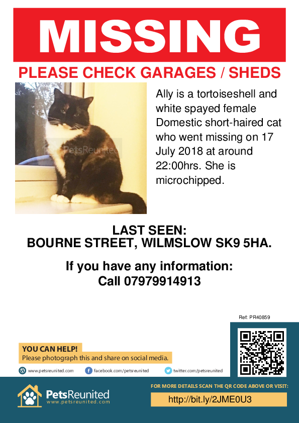 Lost pet poster - Lost cat: Tortoiseshell and white cat called Ally
