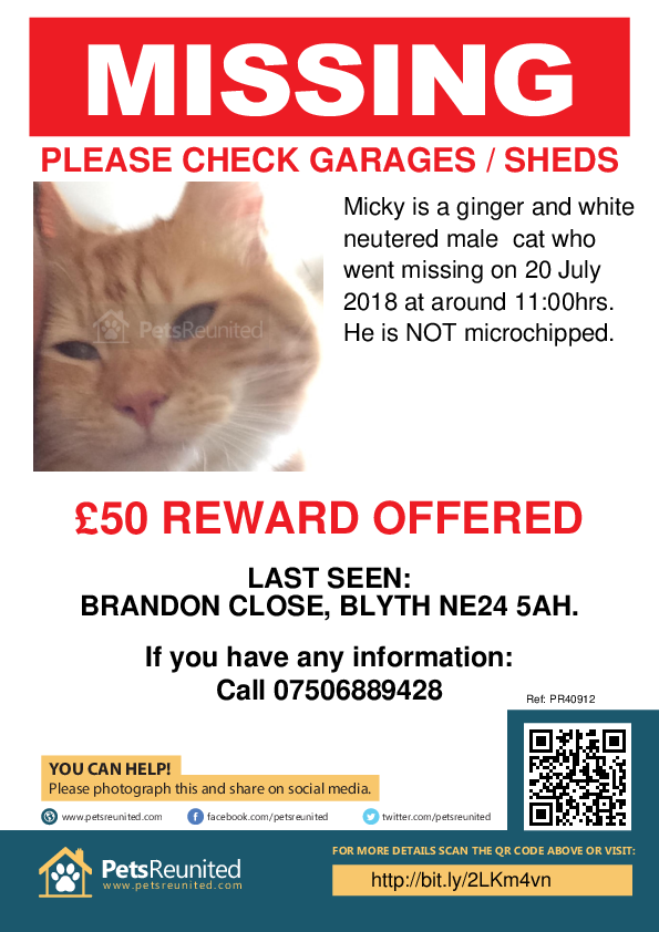 Lost pet poster - Lost cat: Ginger and white cat called Micky