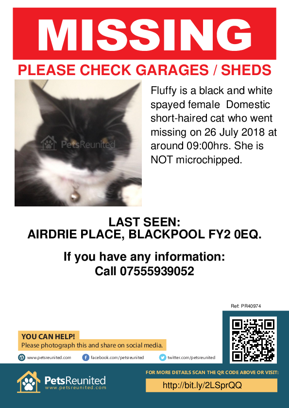 Lost pet poster - Lost cat: Black and white cat called Fluffy
