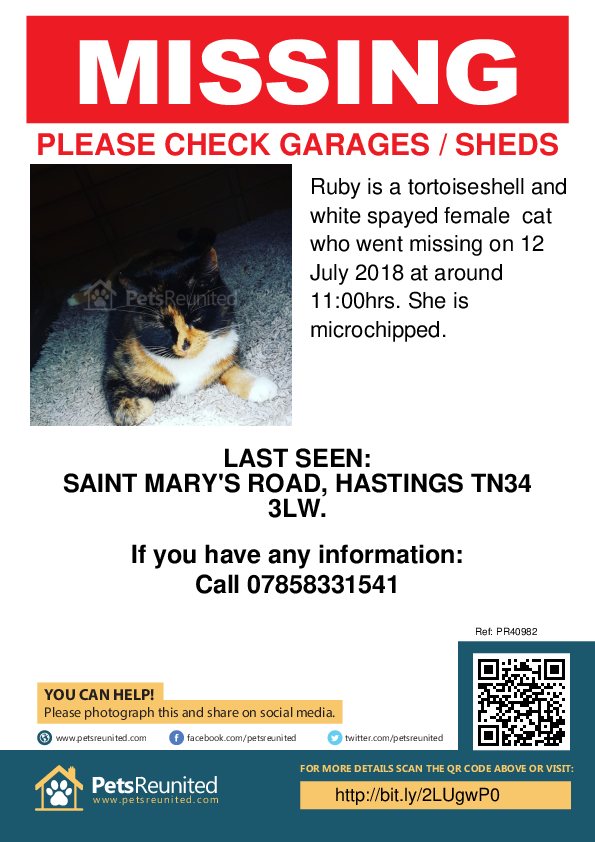 Lost pet poster - Lost cat: Tortoiseshell and white cat called Ruby