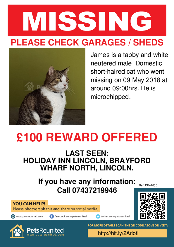 Lost pet poster - Lost cat: Tabby and white cat called James