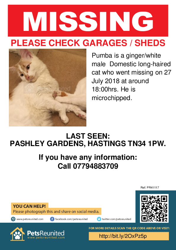 Lost pet poster - Lost cat: Ginger/White cat called Pumba
