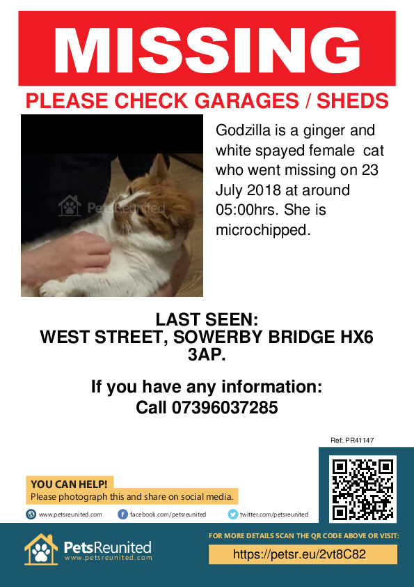 Lost pet poster - Lost cat: Ginger and white cat called Godzilla