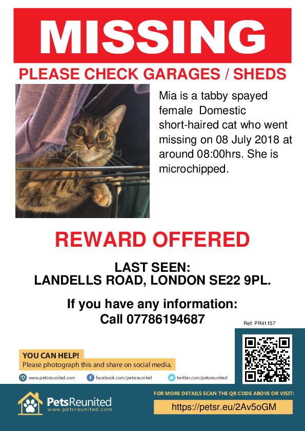 Lost pet poster - Lost cat: Tabby cat called Mia