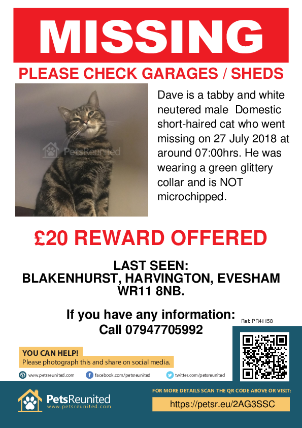 Lost cat: Tabby and white cat called Dave - Evesham area