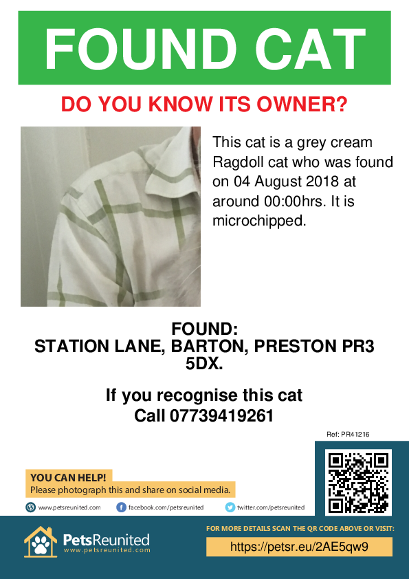 Found pet poster - Found cat: Grey cream Ragdoll cat