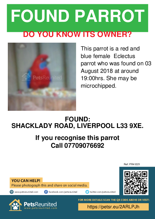 Found pet poster - Found parrot: Red and blue Eclectus parrot