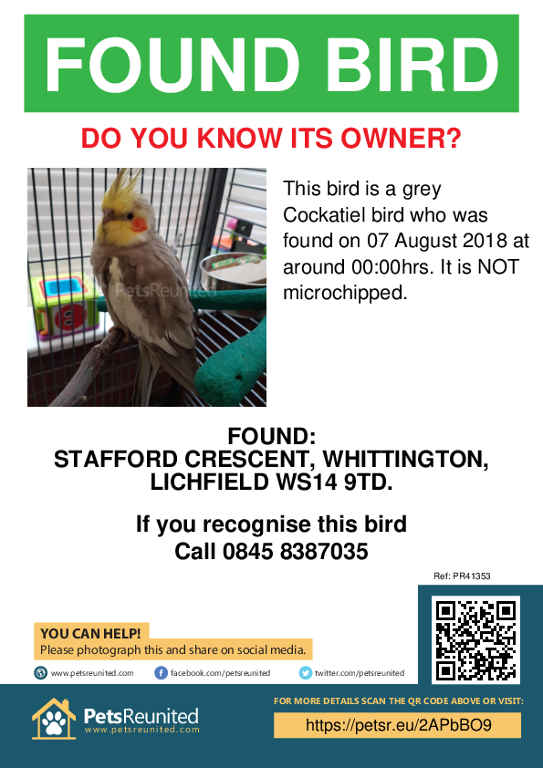 Found pet poster - Found bird: Grey Cockatiel bird