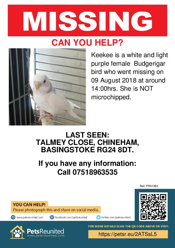 Lost pet poster - Lost bird: White and light purple Budgerigar bird called Keekee