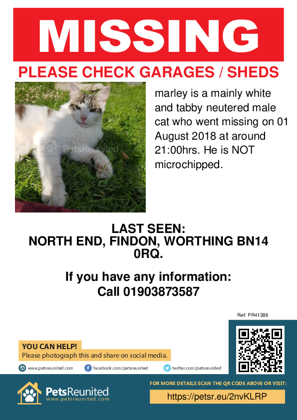 Lost pet poster - Lost cat: mainly white and tabby cat called marley