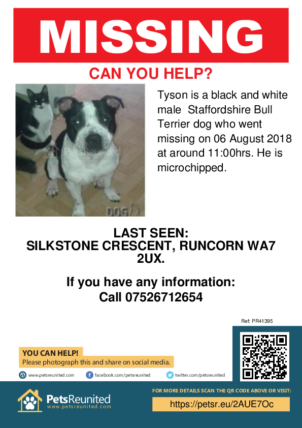 Lost pet poster - Lost dog: Black and white Staffordshire Bull Terrier dog called Tyson