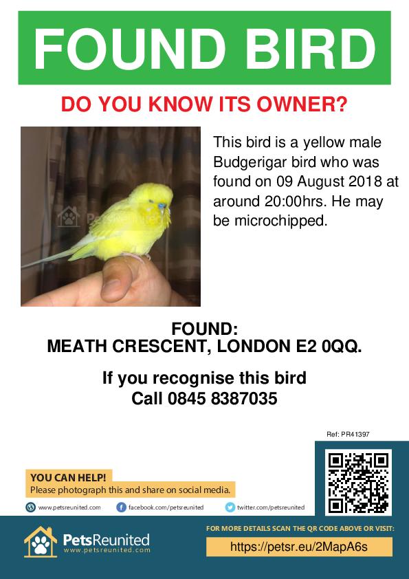 Found pet poster - Found bird: Yellow Budgerigar bird