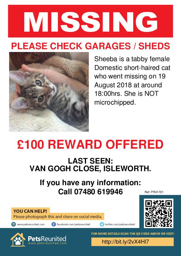 Lost pet poster - Lost cat: Tabby cat called Sheeba