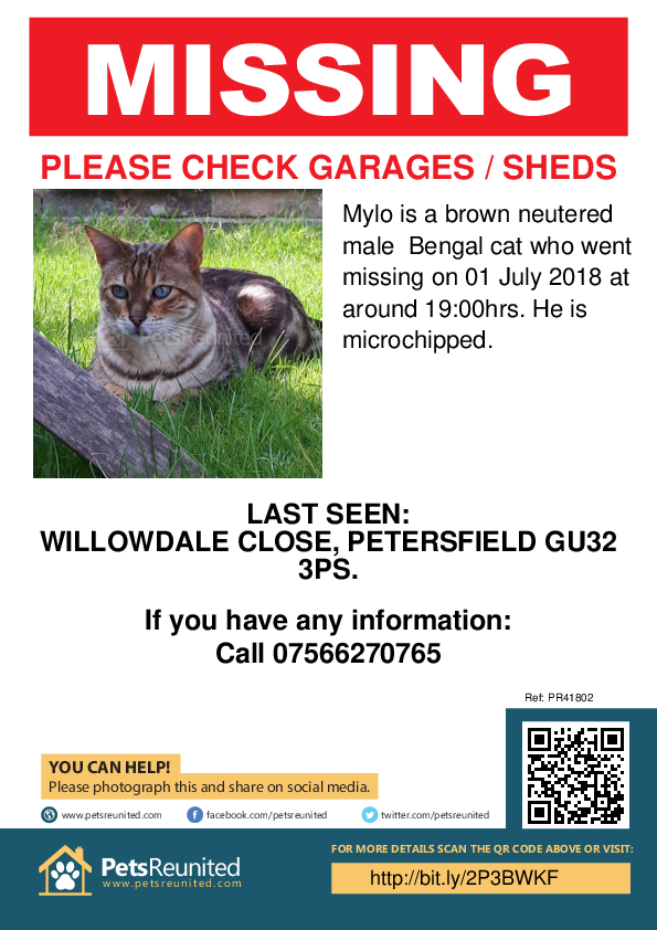 Lost pet poster - Lost cat: Brown Bengal cat called Mylo