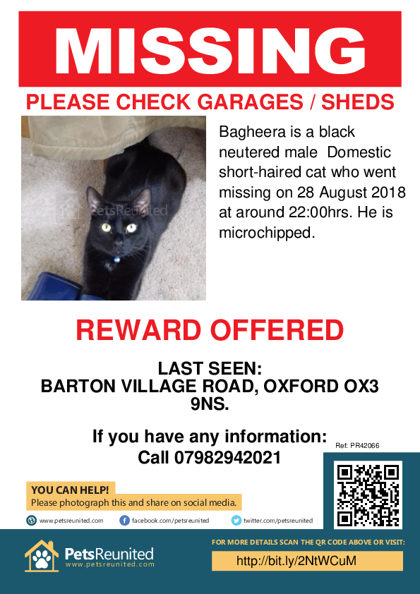 Lost pet poster - Lost cat: Black cat called Bagheera