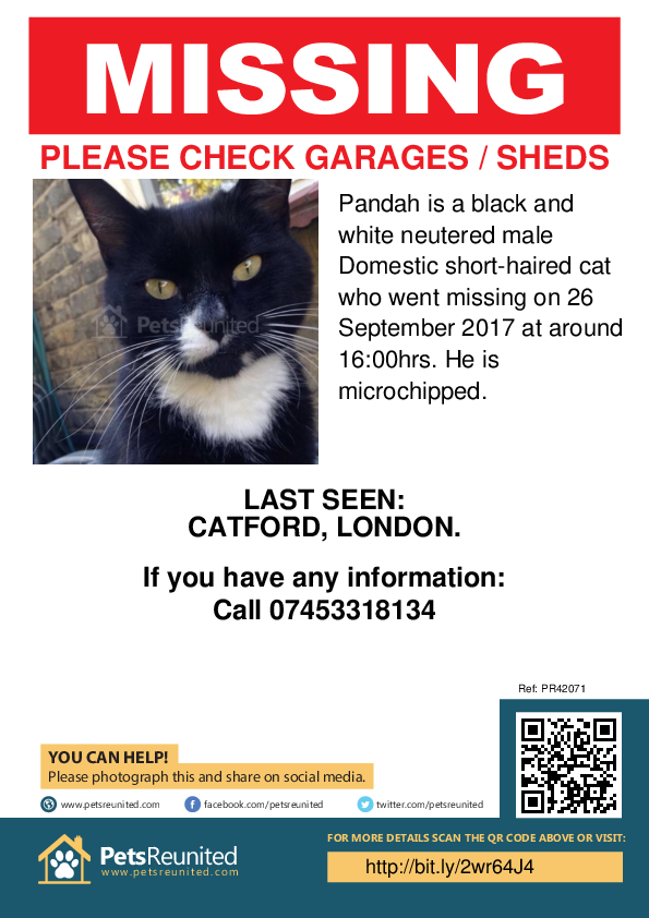 Lost pet poster - Lost cat: Black and white cat called Pandah