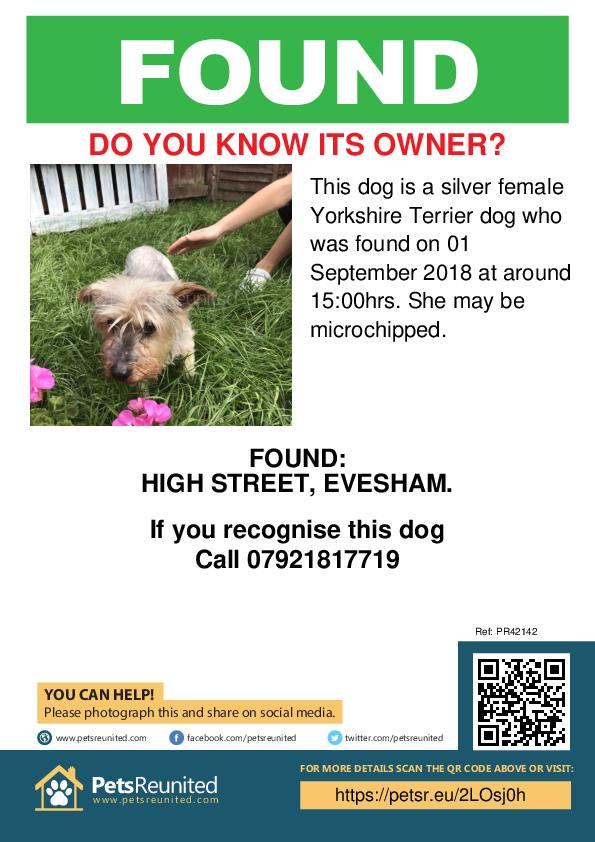 Found pet poster - Found dog: Silver Yorkshire Terrier dog
