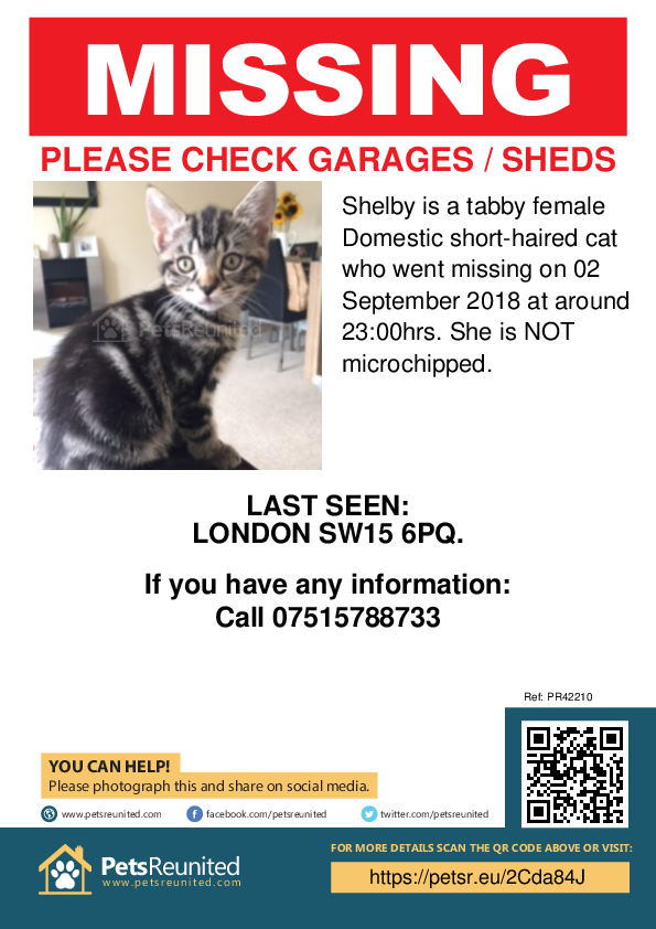 Lost pet poster - Lost cat: Tabby cat called Shelby