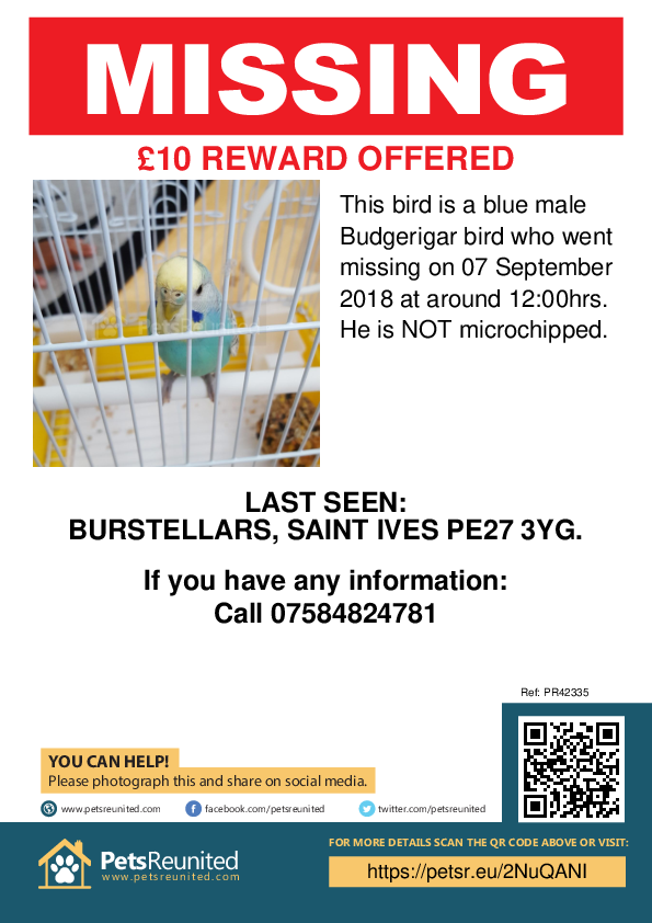 Lost pet poster - Lost bird: Blue Budgerigar bird [name witheld]