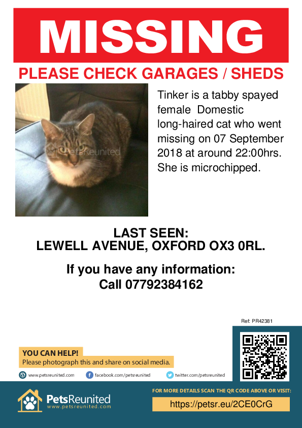 Lost pet poster - Lost cat: Tabby cat called Tinker