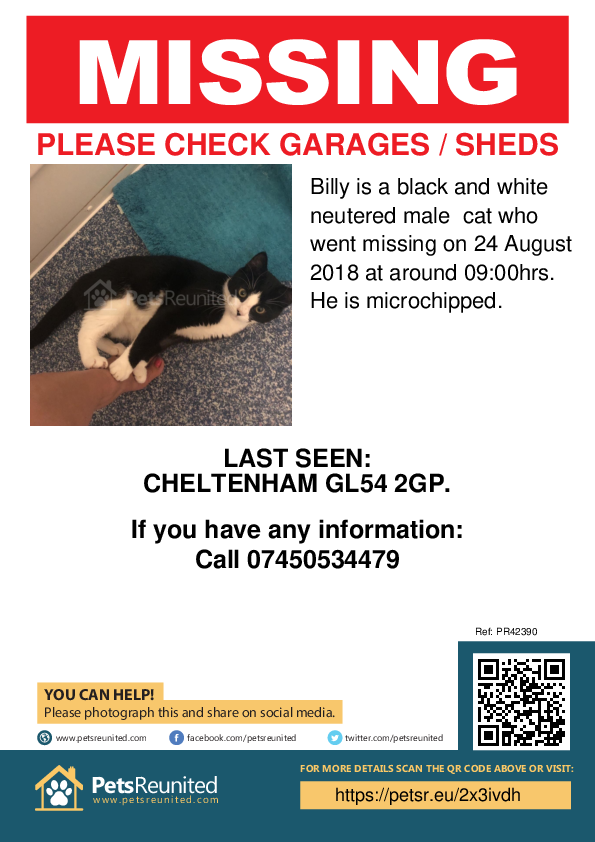 Lost pet poster - Lost cat: Black and white cat called Billy