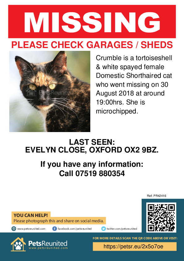 Lost pet poster - Lost cat: Tortoiseshell  & white cat called Crumble