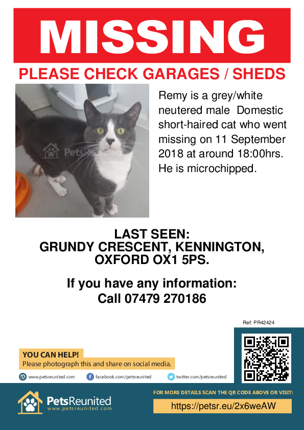 Lost pet poster - Lost cat: Grey/White cat called Remy
