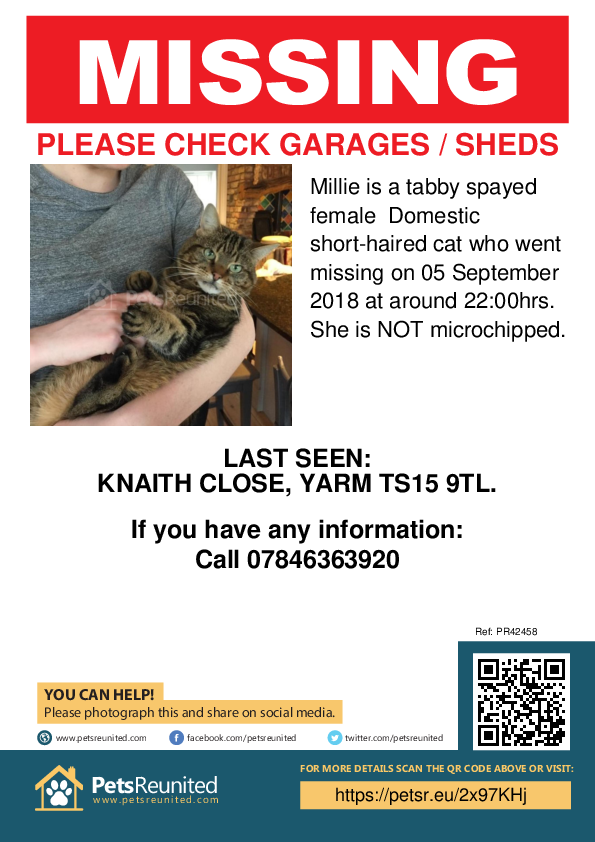 Lost pet poster - Lost cat: Tabby cat called Millie
