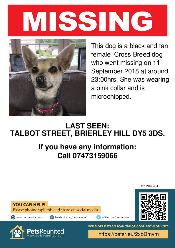 Lost pet poster - Lost dog: Black and Tan dog [name witheld]