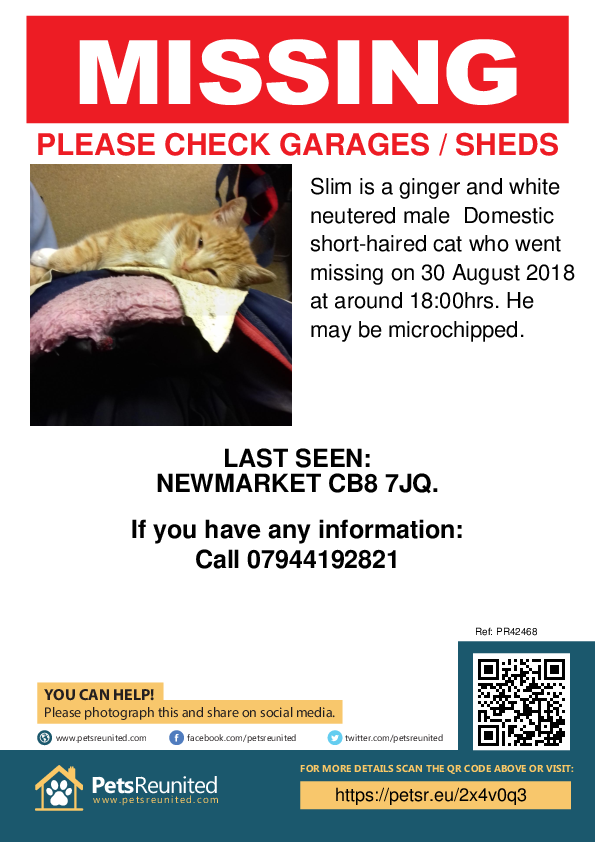 Lost pet poster - Lost cat: Ginger and white cat called Slim