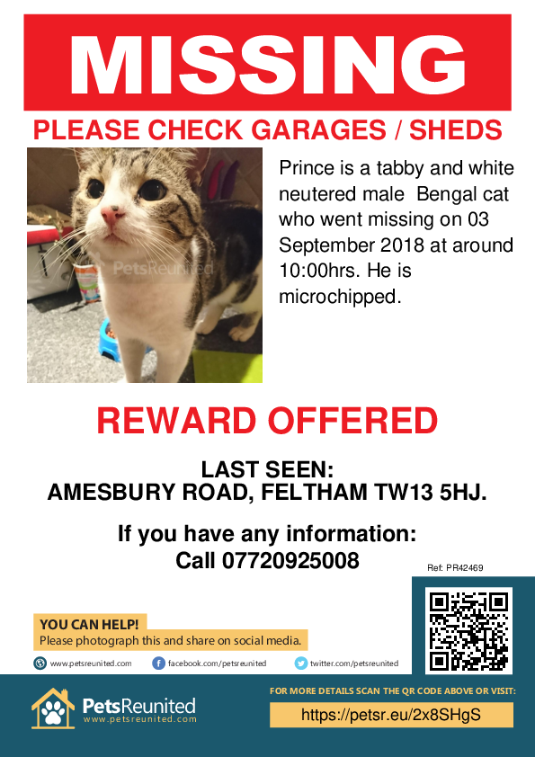 Lost pet poster - Lost cat: Tabby and white Bengal Cross cat called Prince