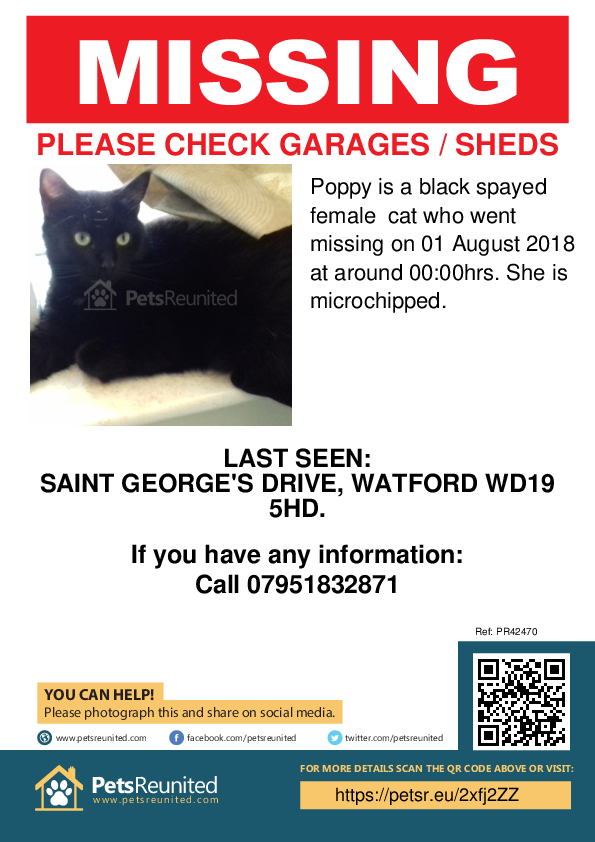 Lost pet poster - Lost cat: Black cat called Poppy